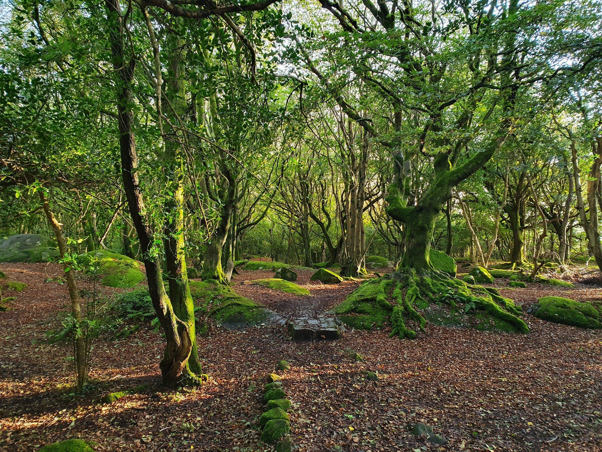Barna Woods Tracks - Visit Galway
