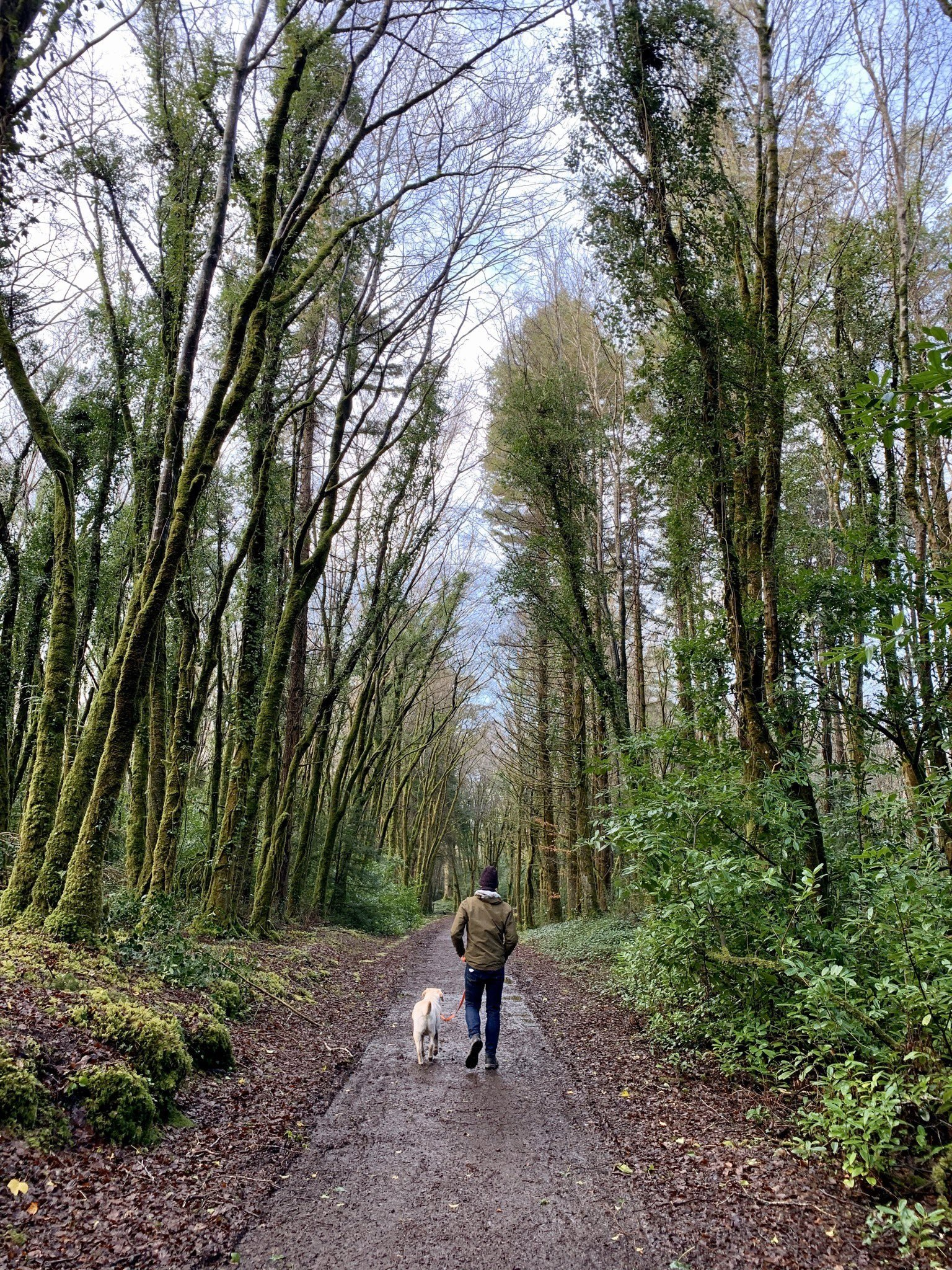 Cong Woodland Walks - Visit Galway