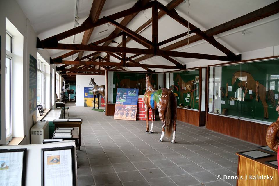 Dartfield Horse Museum and Heritage Centre - Visit Galway