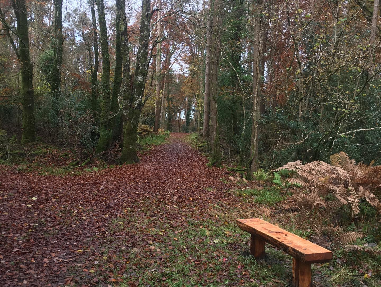 Derrycrag Wood Nature Reserve Galway - Visit Galway