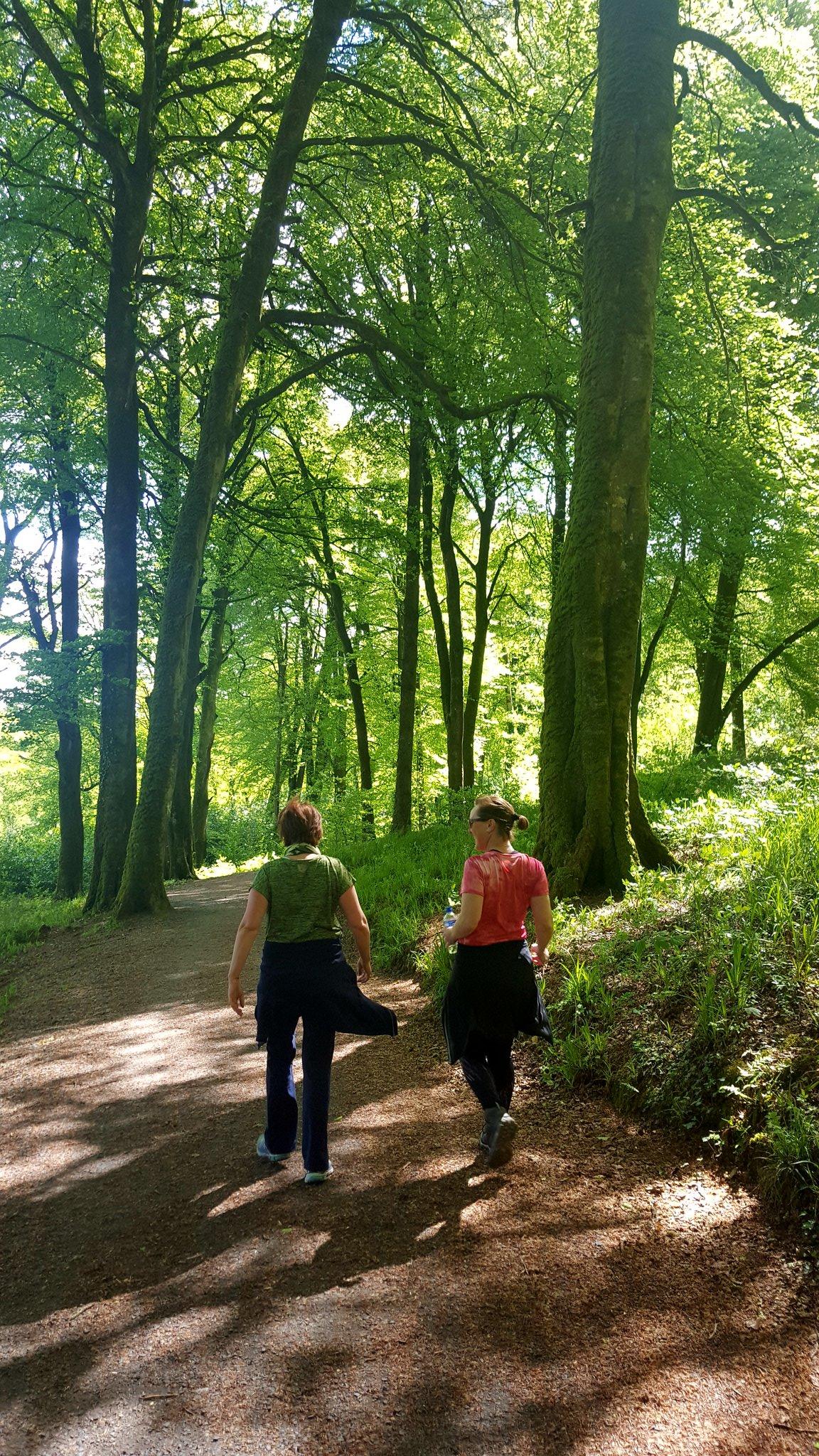 Knockma Forest Park Walks - Visit Galway
