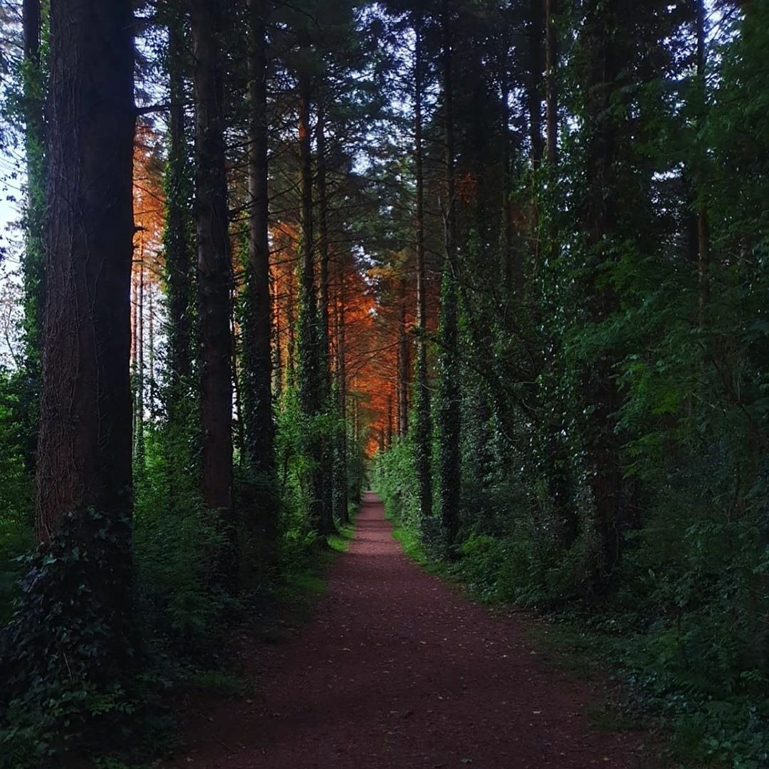 Monivea Woodland Walk - Visit Galway