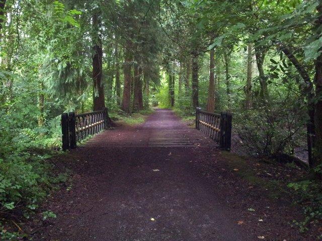 Mountbellew Woodland Bridge - Visit Galway
