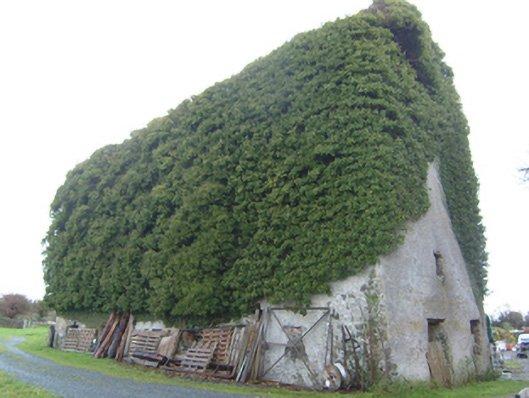 Moyne Mill - Visit Galway