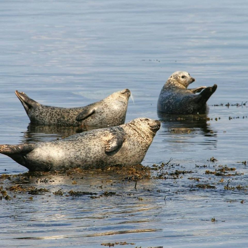 Seal Colony on Inis Mór Seals Sun Bathing - Visit Galway