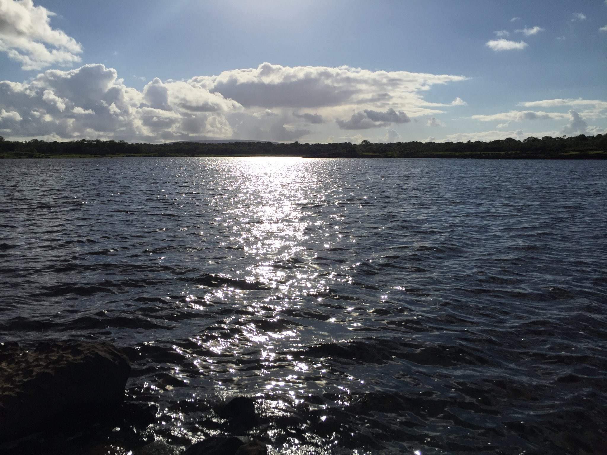 Water Monster at Coole Lake in Galway - Visit Galway